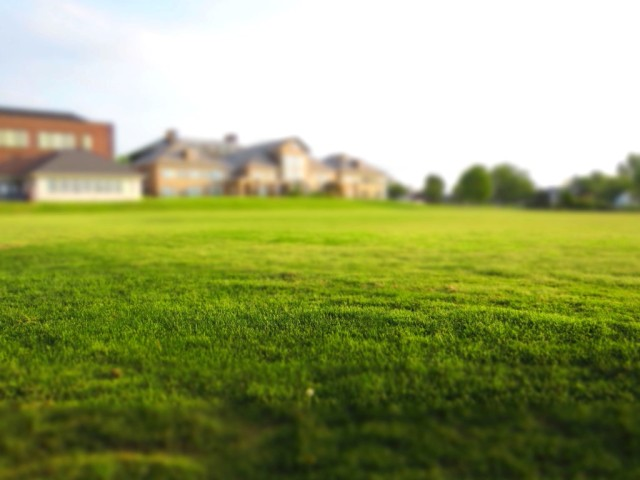 green grass, lawn, summer, grass